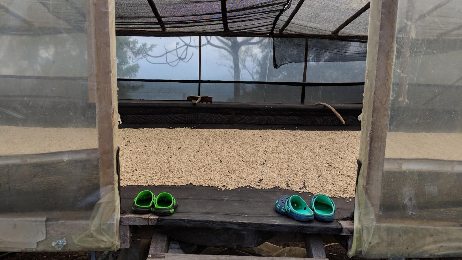 Coffee Drying
