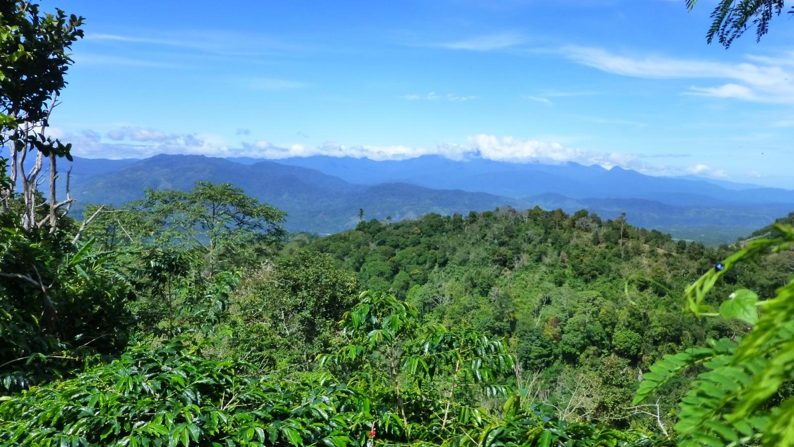 Indonesia coffee origin
