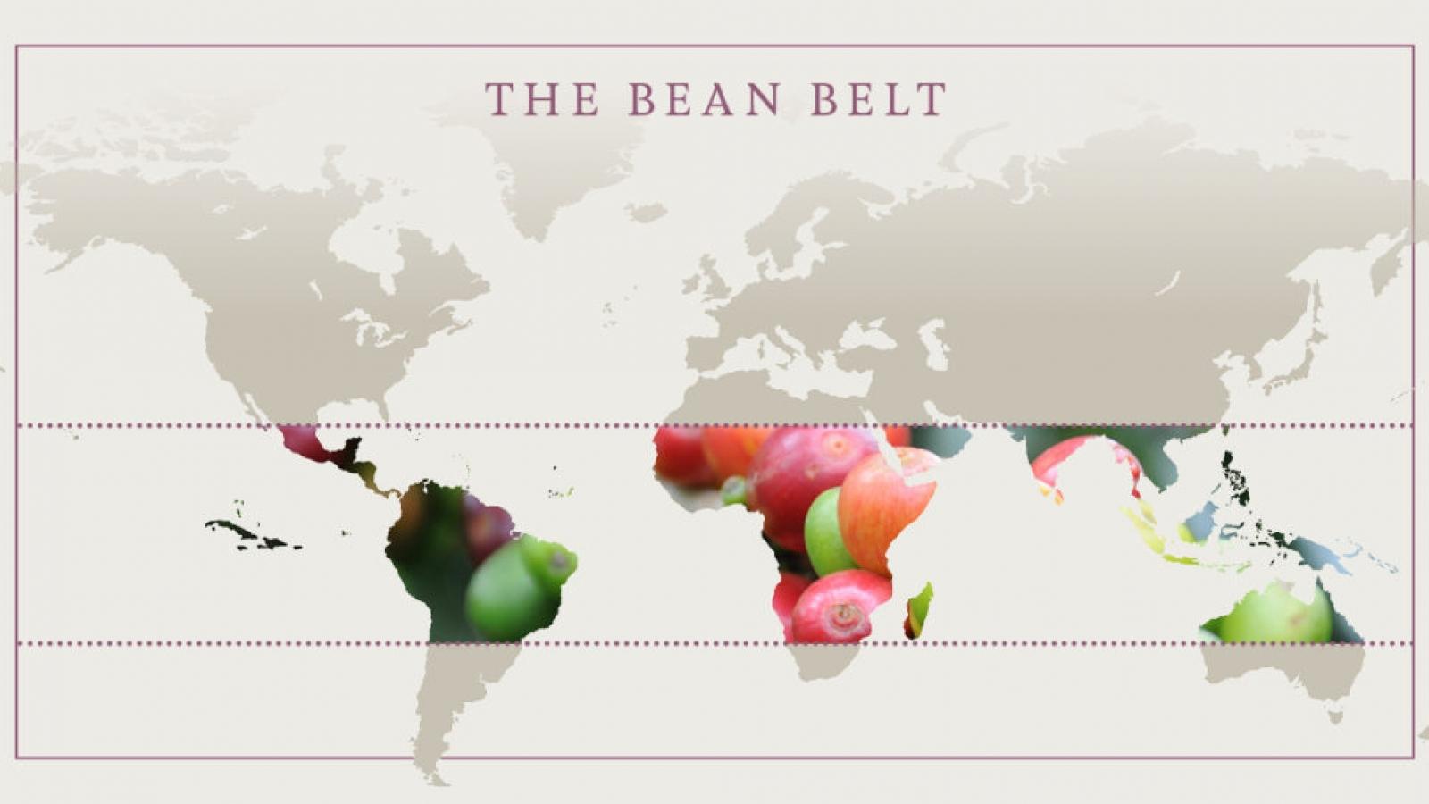 Lincoln & York coffee bean belt